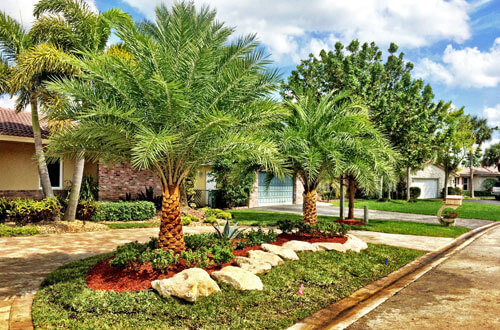 Newly designed and installed landscaping at a home in Fort Lauderdale, FL