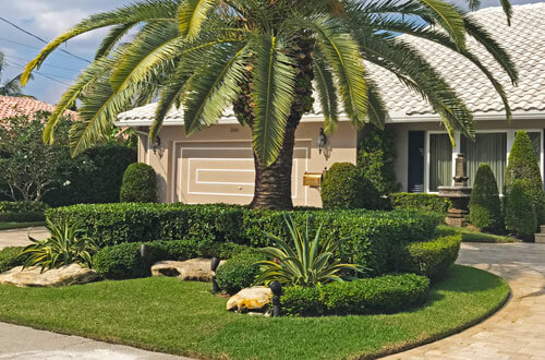 Perfectly maintained yard and landscaping by Go2Scape.Inc in Parkland, FL